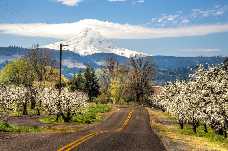 Landelijke weg, appelboomgaarden, Mt. Kap stock afbeelding