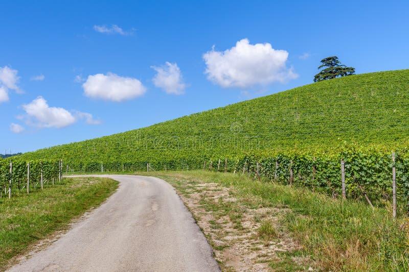 Landelijke weg en wijngaarden in Italië stock afbeelding