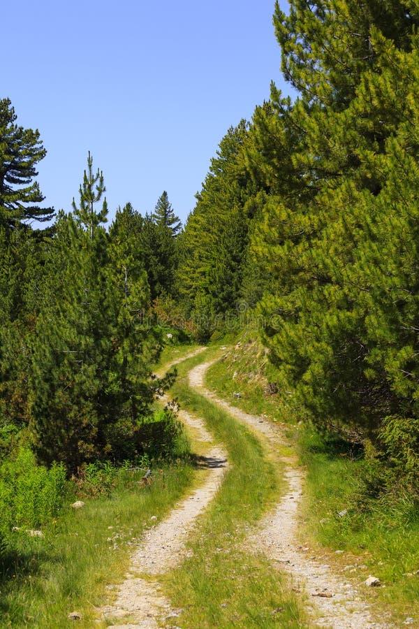 Landelijke weg in het bos royalty-vrije stock afbeeldingen