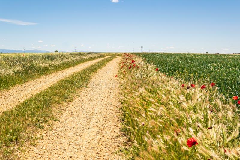 Landelijke weg in het platteland met graangewassengewassen tijdens de lente royalty-vrije stock fotografie