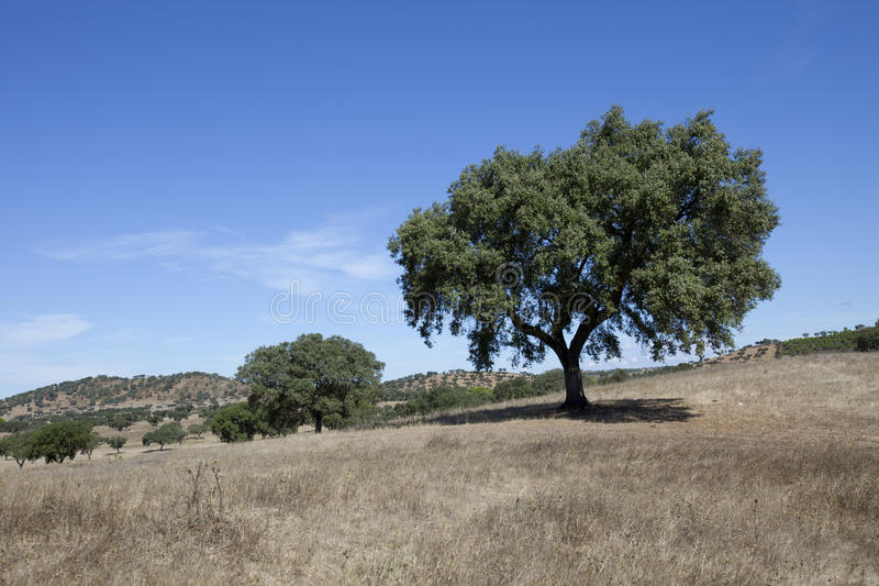 Landescape do Alentejo foto de stock royalty free
