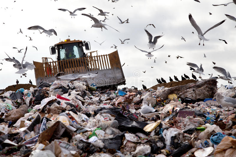 Landfill with birds royalty free stock images