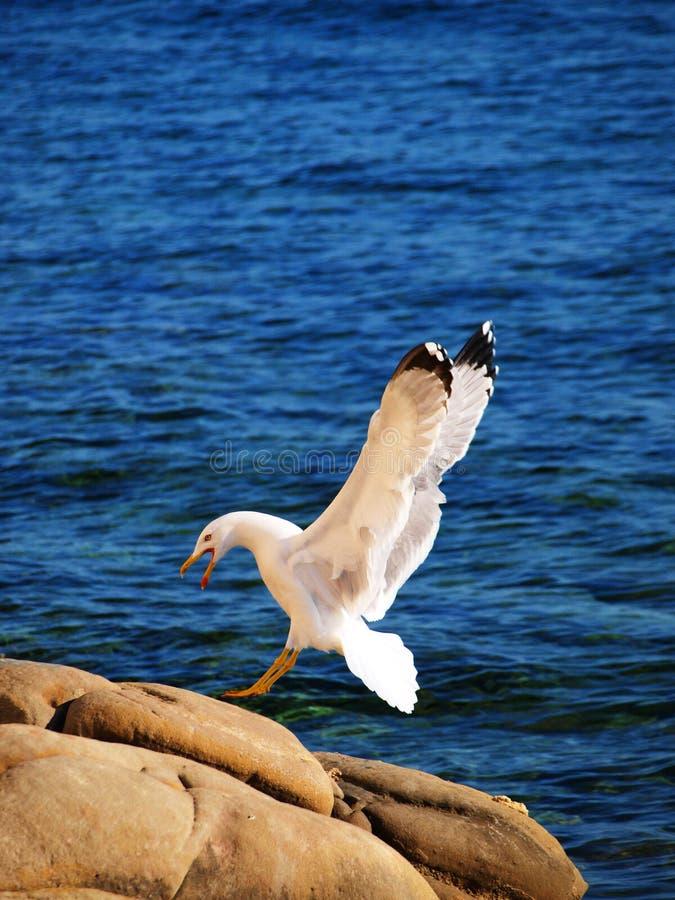 Free Landing Stock Image - 14222551