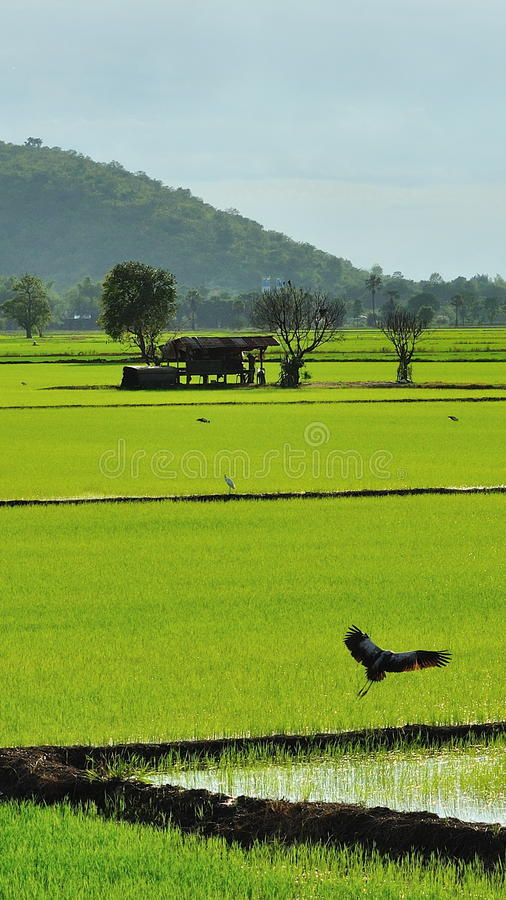 Download Landing Royalty Free Stock Photography - Image: 26472677