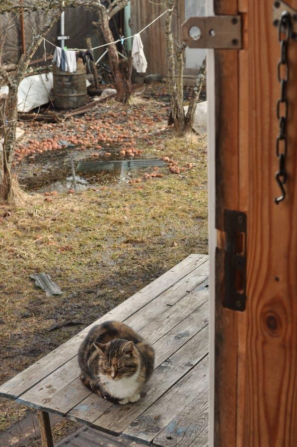 Download Landlandschaft Mit Einer Katze Stockbild - Bild von jahreszeit, kitten: 90231693