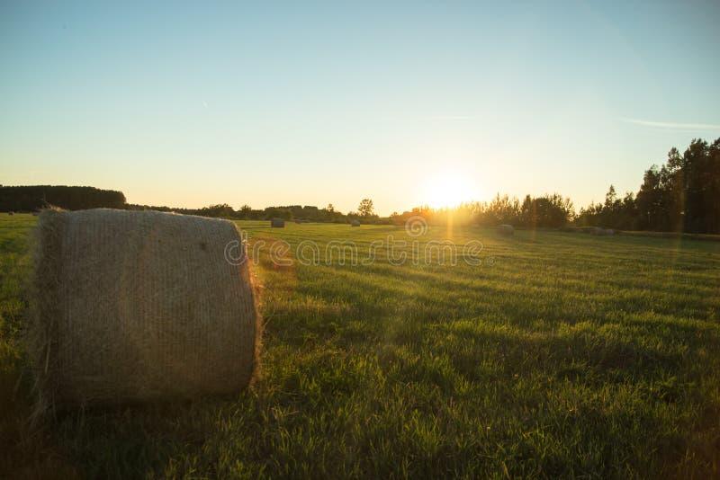Landnatur mit großem Getreidefeld lizenzfreie stockbilder