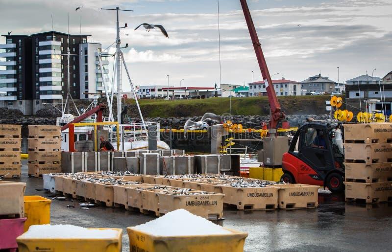 Landningar av makrillen i Island royaltyfri foto