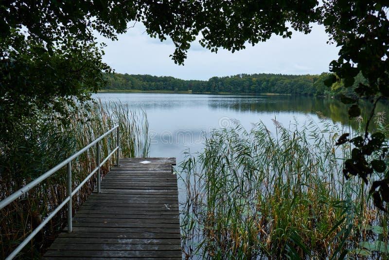 Landningetapp på en lantlig sjö med en säkerhetsräcke till det vänstert och en skog i bakgrunden På sidan kommer vassen ut ur fotografering för bildbyråer