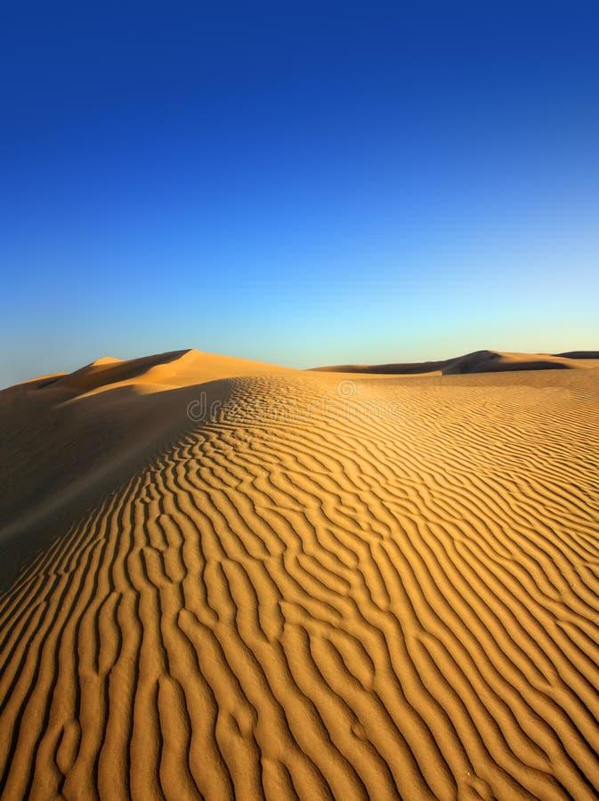 Landsape в пустыне стоковая фотография