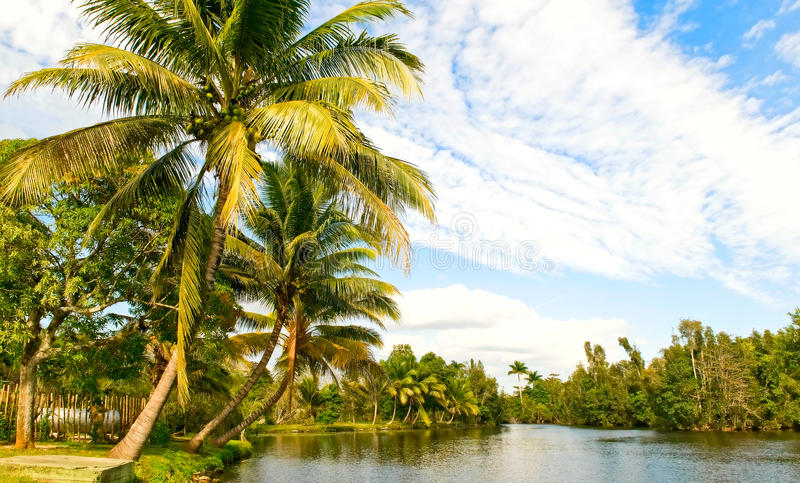 Landsape tropical photo libre de droits