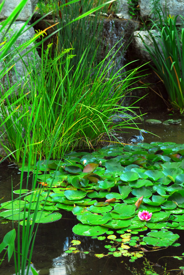 landsaping的池塘 免版税库存照片