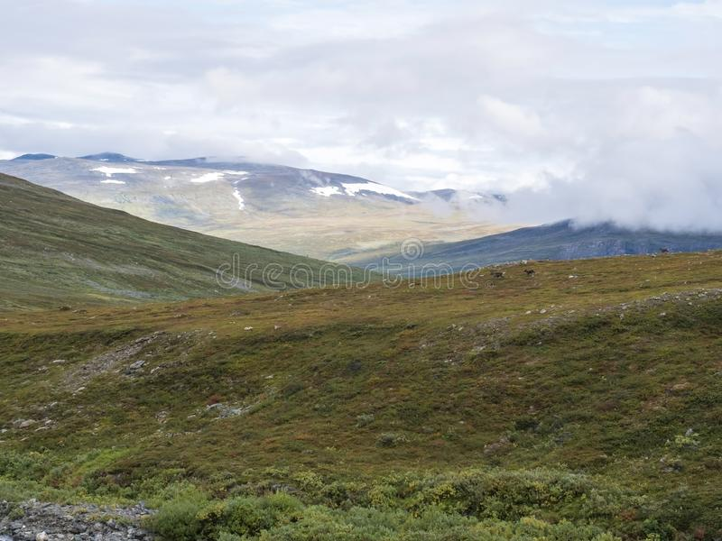 Landscap of Lapland nature at Kungsleden hiking trail with reindeers, colorful mountains, rocks, autumn colored bushes, birch tree. And heath in dramatic light royalty free stock photos