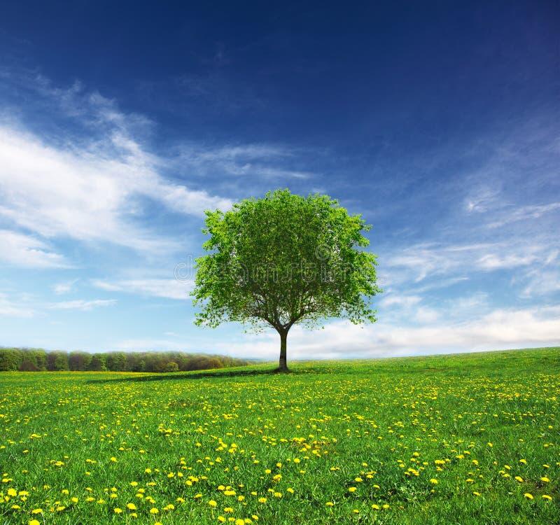 landscape весеннее время стоковое изображение