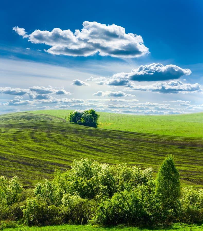 landscape весна стоковые изображения rf