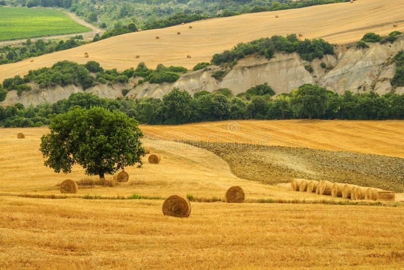 Ландшафт в Тоскане на лете стоковые фотографии rf