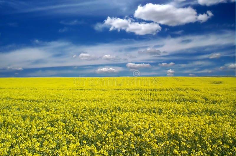Download Landscape stock photo. Image of yellow, field, horizon, golden - 510