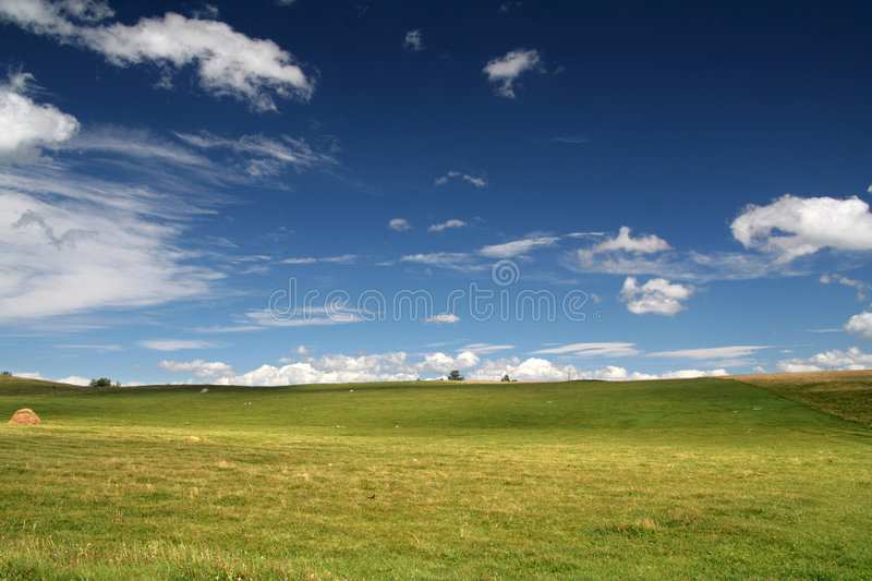 Landscape. Summer green Landscape royalty free stock photos