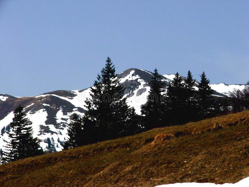 Download Landscape stock image. Image of landscape, firr, white - 112353