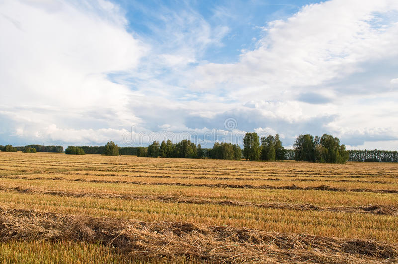 Download Landscape stock image. Image of russia, countryside, grass - 13312351