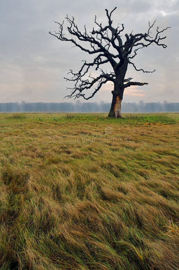 Download Landscape stock image. Image of farm, dawn, gold, scenic - 1538009