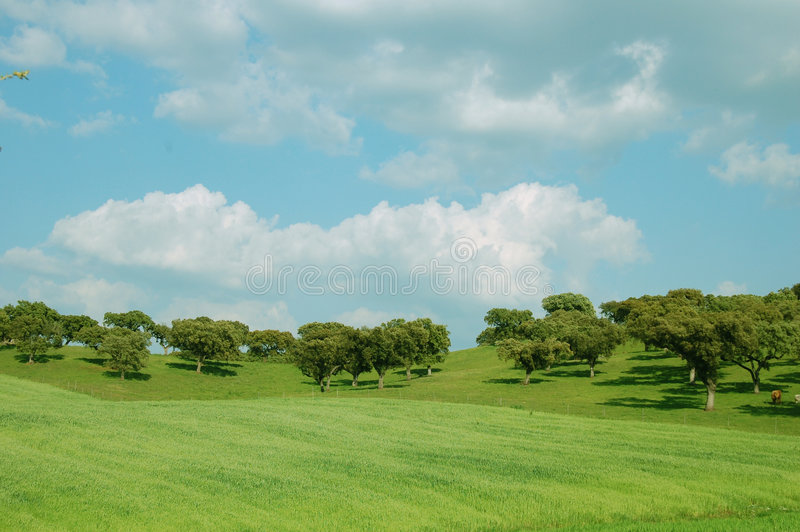 Landscape royalty free stock photos
