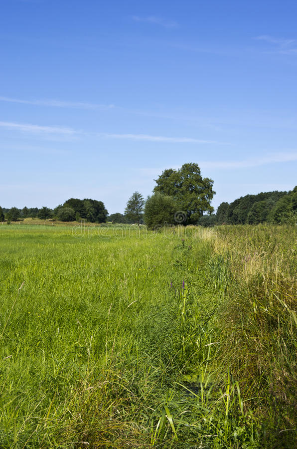 Download Landscape stock image. Image of rushes, meadow, canal - 26431527