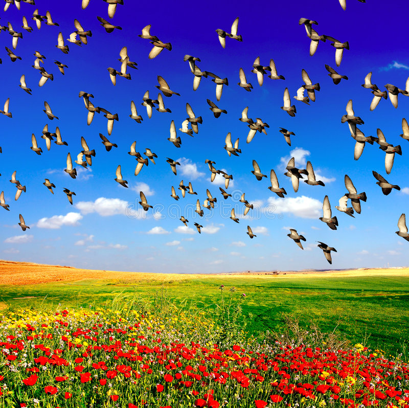 Landscape. Beautiful landscape of birds and red poppies at front