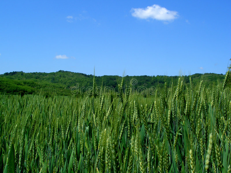 Download Landscape...(3) Stock Photography - Image: 197292
