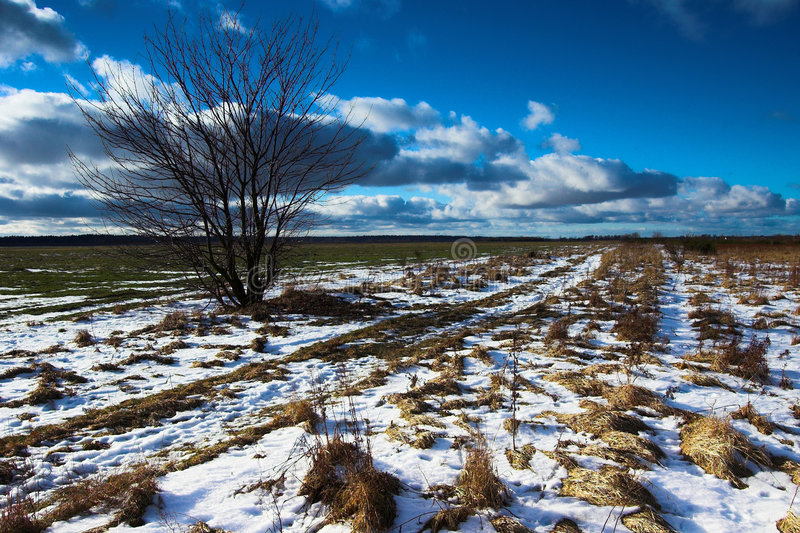 Landscape. Winter - spring landscape royalty free stock images