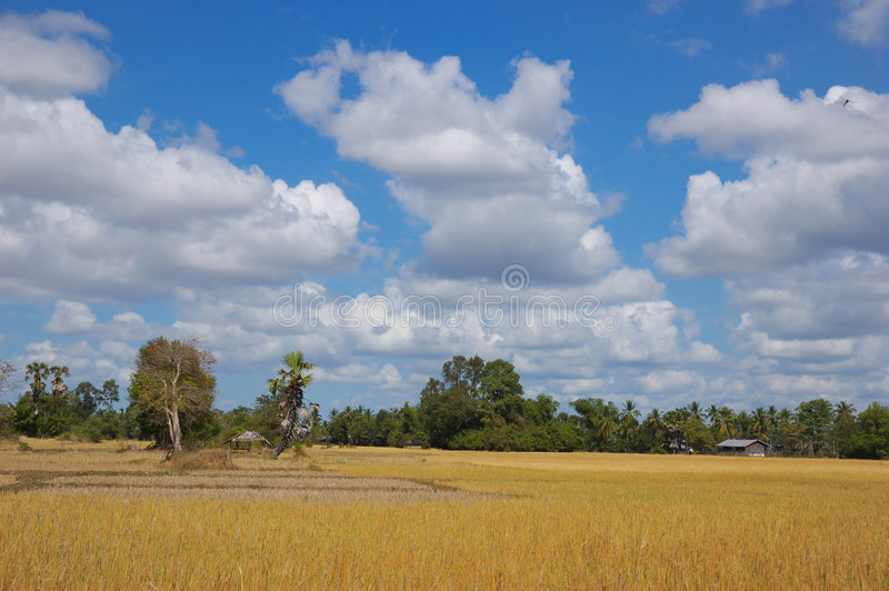Landscape royalty free stock images