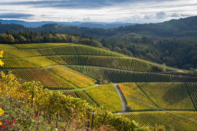 Landscape above Durbach in the black forest. Autumn in the vineyards of Durbach in the black forest in germany stock images