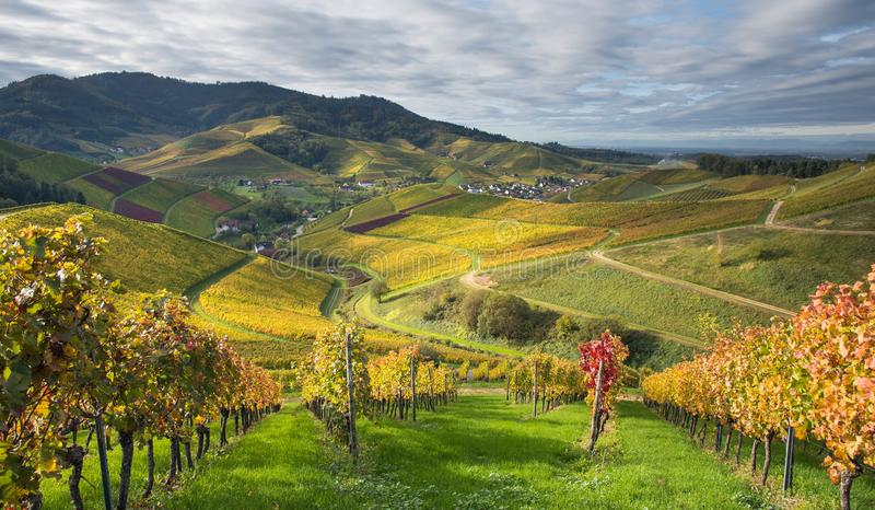 Landscape above Durbach in the black forest. Autumn in the vineyards of Durbach in the black forest in germany royalty free stock photography