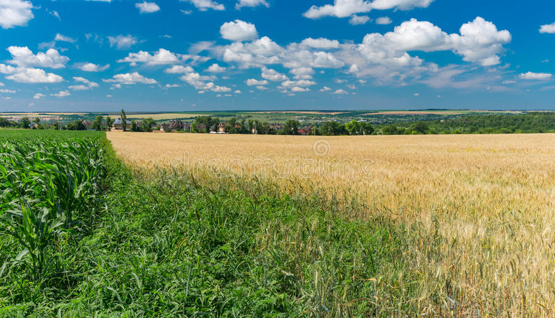 Landscape with agricultural fields in central Ukraine near Dnepr city. Summer landscape with agricultural fields in central Ukraine near Dnepr city stock photo