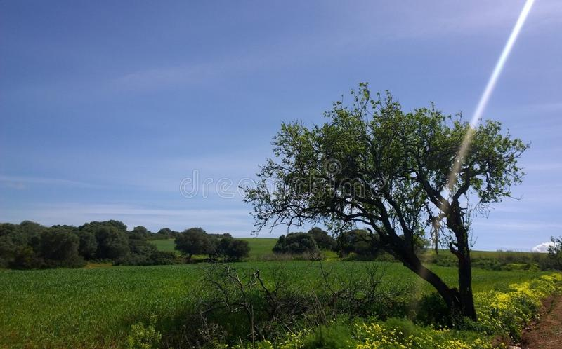 Landscape Algeria city summer time stock photography