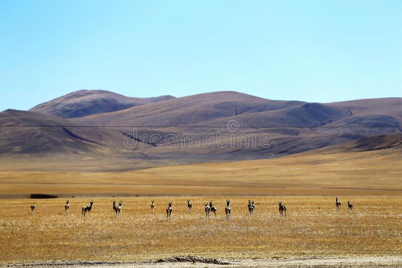"Landscape of Ali County. Ali is also called ""Ngari"" in Tibetan Language, located in western Tibet and the most mysterious place in royalty free stock image"