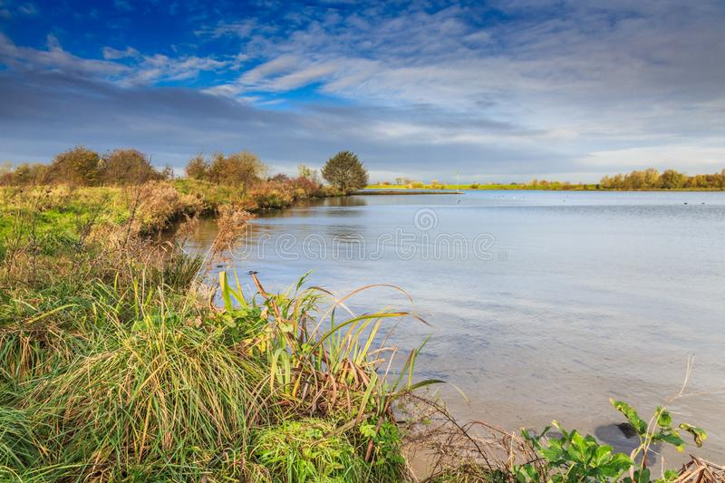 Landscape along bank Dutch river Lek in warm sunlight with grove trees. And bushes in autumn colors against dark sky with clouds stock image