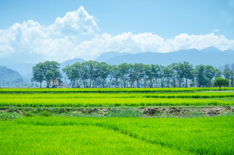 Landscape of Ambasamudram, Tamil Nadu royalty free stock photography