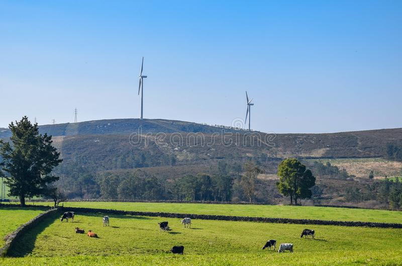 Landscape of animals and renewable energy royalty free stock photography