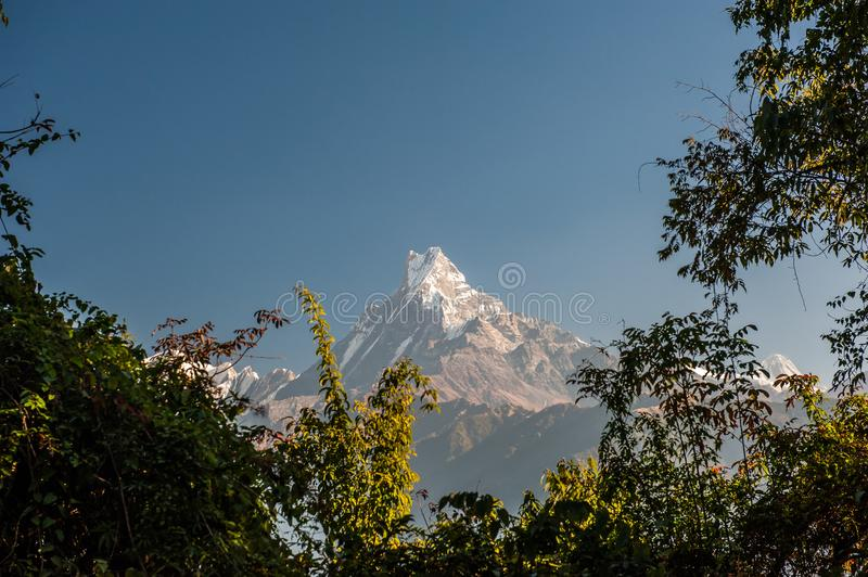 Landscape with Annapurna South, Hiunchuli and Machapuchare Fishtail Peaks surrounded by trees. Himalaya Mountains, Nepal stock image