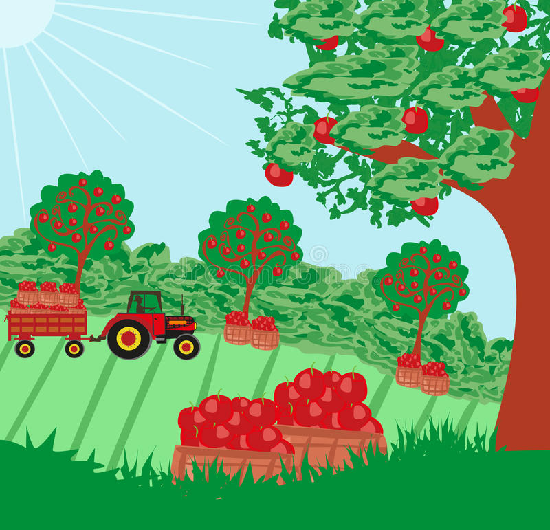 Landscape with apple trees. And man driving a tractor with a trailer royalty free illustration