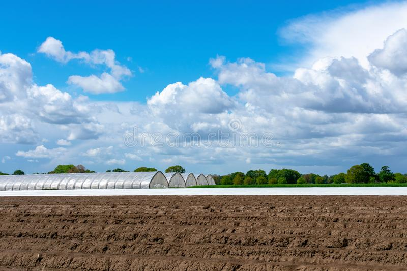 Landscape with asparagus field and greenhouse at blue cloud sky. Location: Germany, North Rhine-Westphalia, Heiden royalty free stock photo