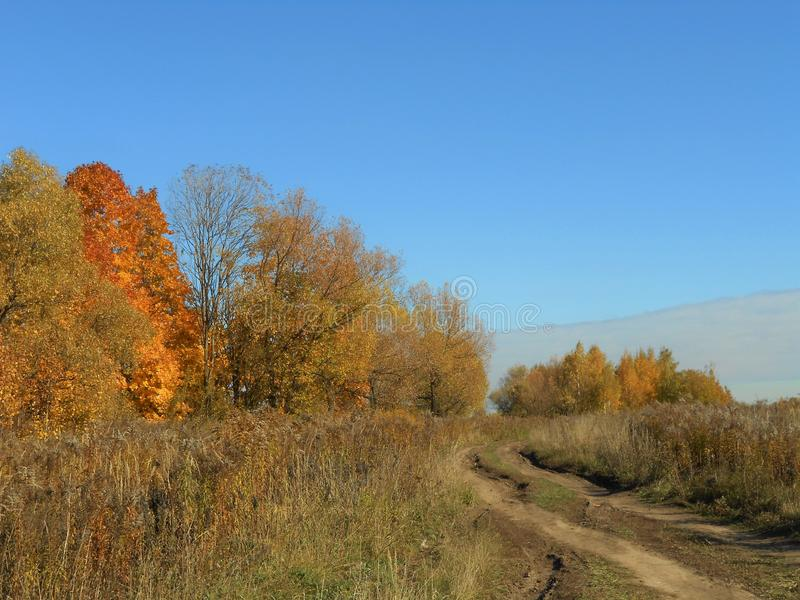 Road in the field in the autumn with colorful trees. stock photography