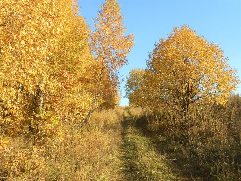 Beautiful autumn landscape with trees and rural road in field. royalty free stock photography