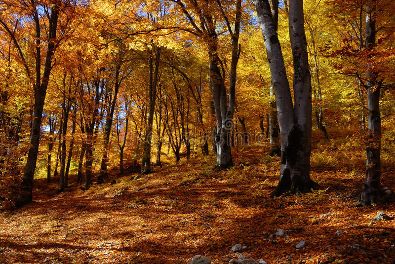 Landscape autumn in the forest royalty free stock photos
