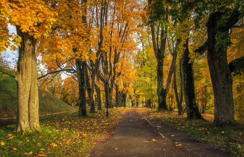Landscape autumn in the park. A beautiful colorful autumn in an alley in a park with yellow and red leaves on trees and grass stock photography