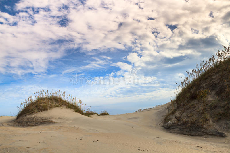 Landscape: Beach Ecology System stock images