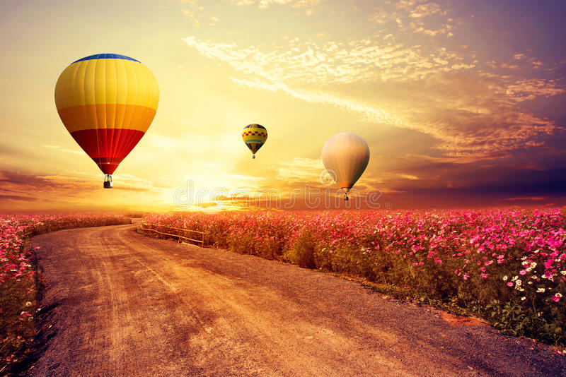 Landscape of beautiful cosmos flower field and hot air balloon on sky sunset stock photo