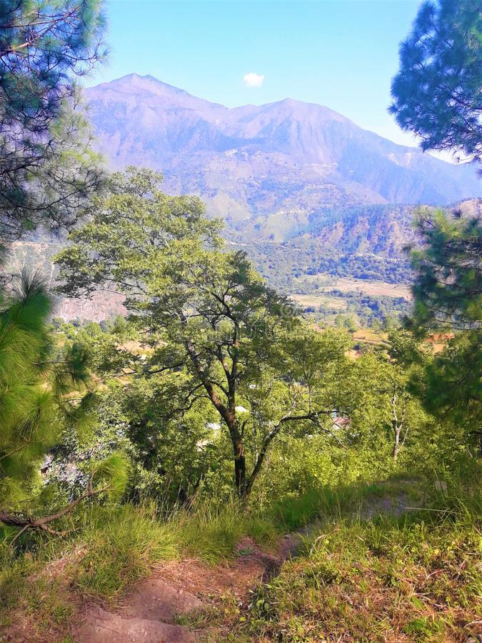 Landscape: A Beautiful green Nature with Plants & Trees stock photography