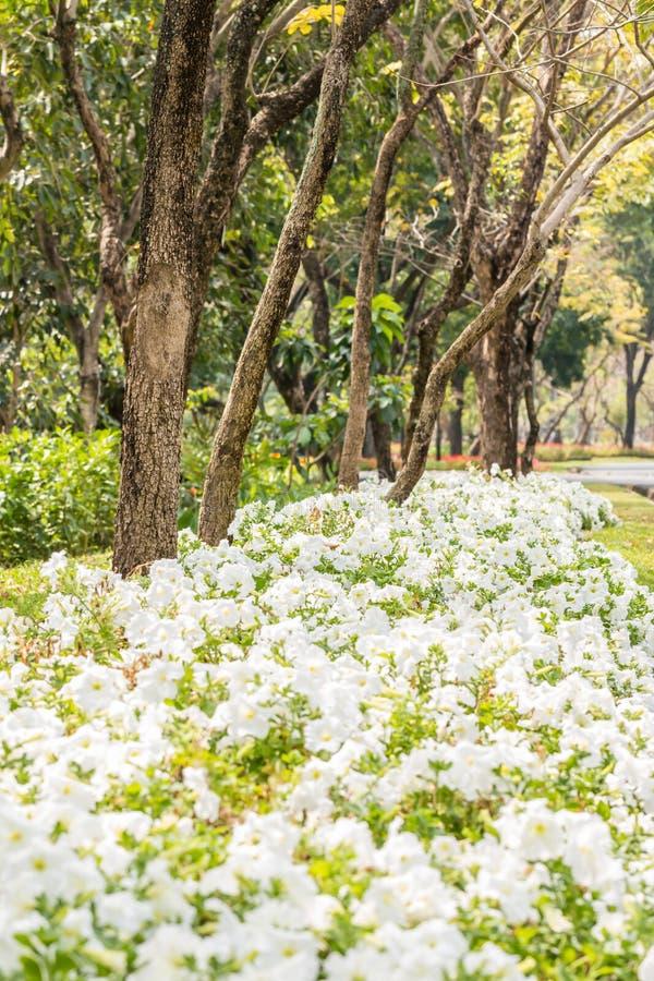 Download Landscape Of Beautiful Park. Stock Photo - Image: 83700058