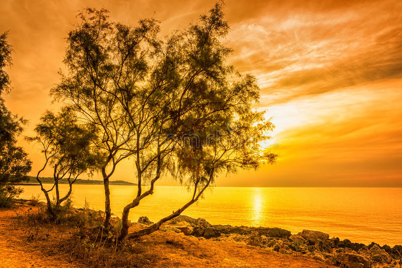 Landscape with a beautiful pine tree royalty free stock photos